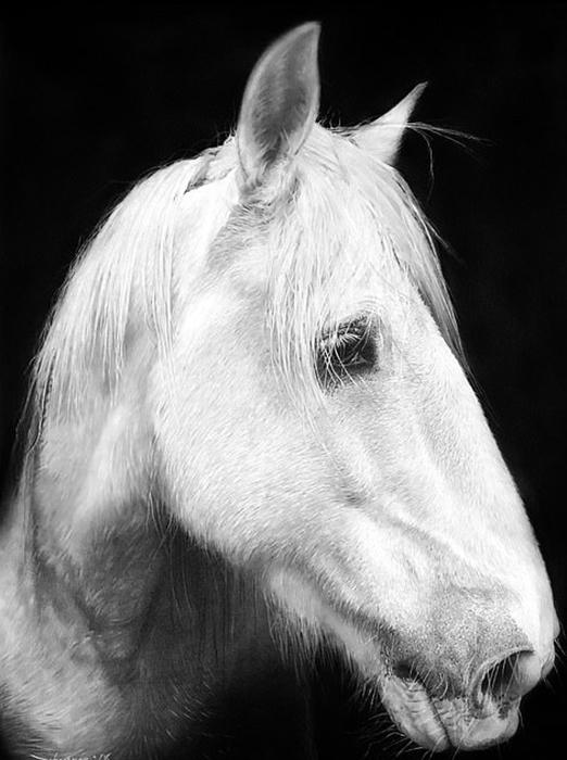 Белая лошадь. Автор: John Fisher.