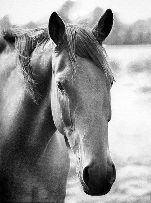 Изображения лошадей, собак и портреты пар - самые частые заказы. Автор: John Fisher.