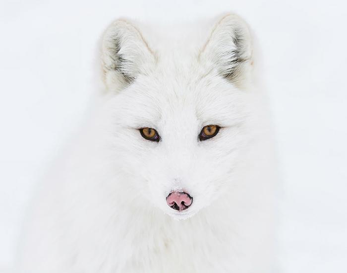 Белое на белом. Фото: Daniel Parent.