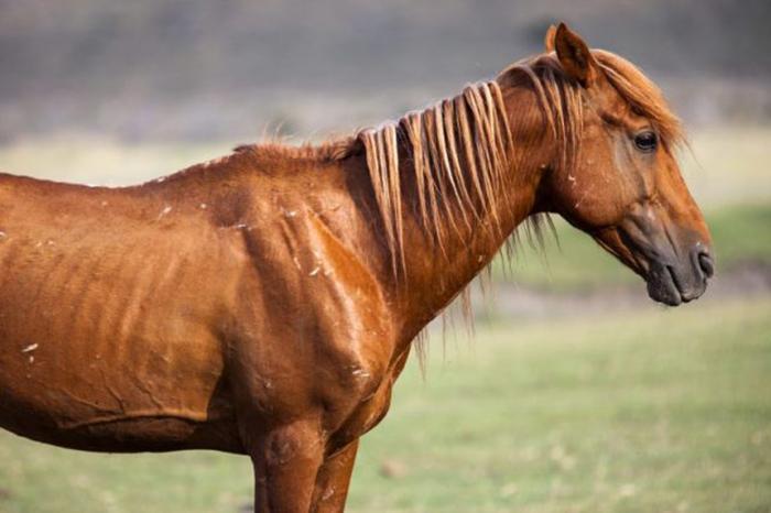 На лошади, на которой выиграл Фрэнк, больше никто не захотел соревноваться.