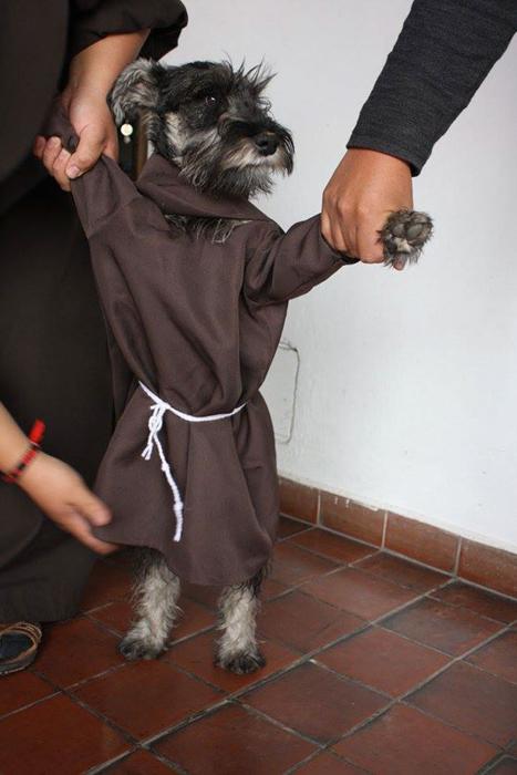 Маленький монах.