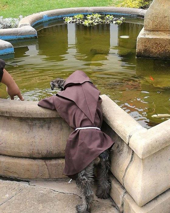 Счастливый пес нашел свой дом в монастыре.