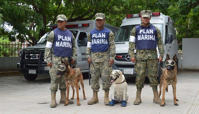 Собаки, спасающие человеческие жизни.