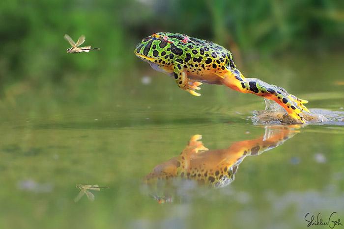 В погоне. Фото: Shikhei Goh.