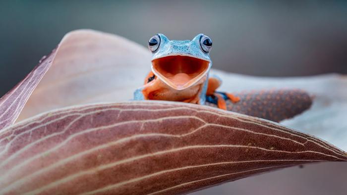 Счастливая лягушка. Фото: Hendy Mp.