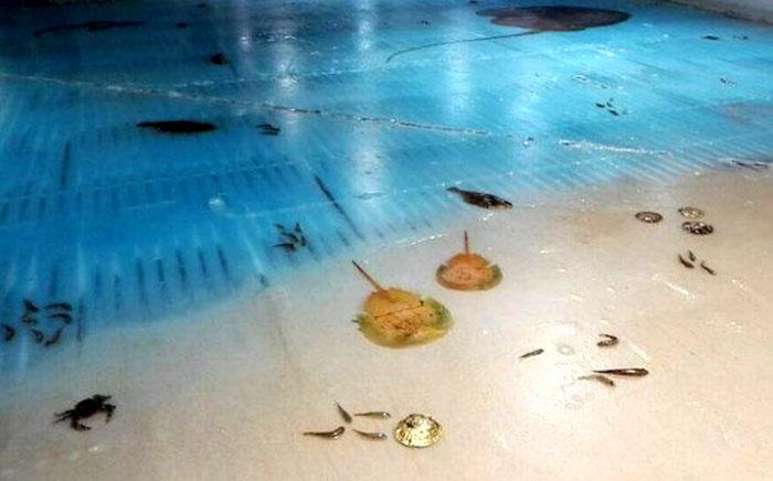 Кроме рыб, в аттракционе использовались и другие жители моря.