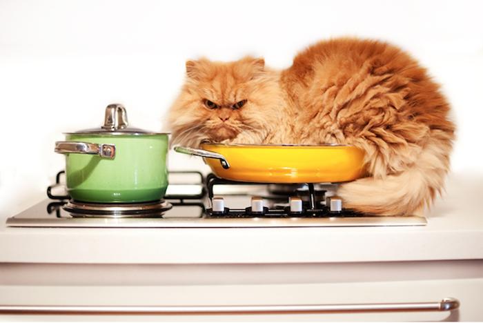 Фотосессия злюки-кота.