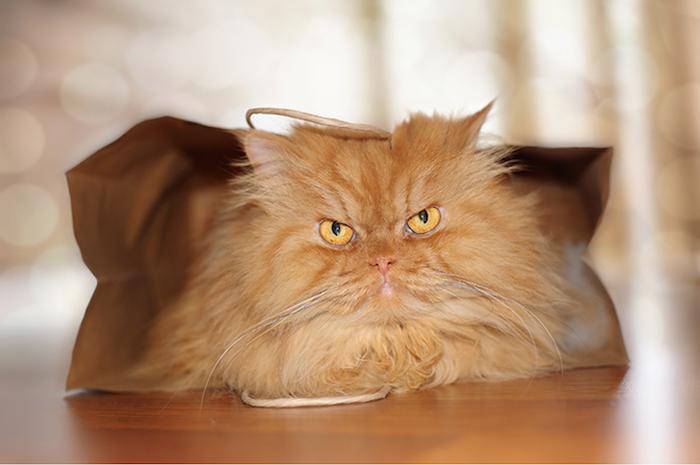 Бумажные пакеты по нраву даже самым злобным котам.