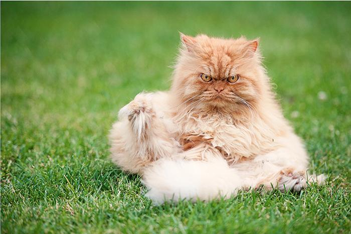 Гарфи - самый злой в мире кот.