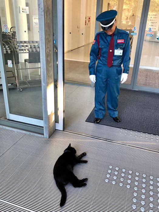 Оба кота очень дружелюбны.