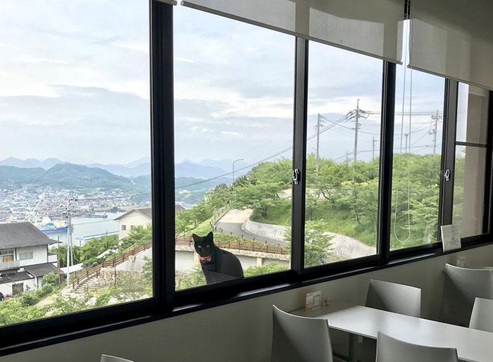 Го заглядывает в окно музея.