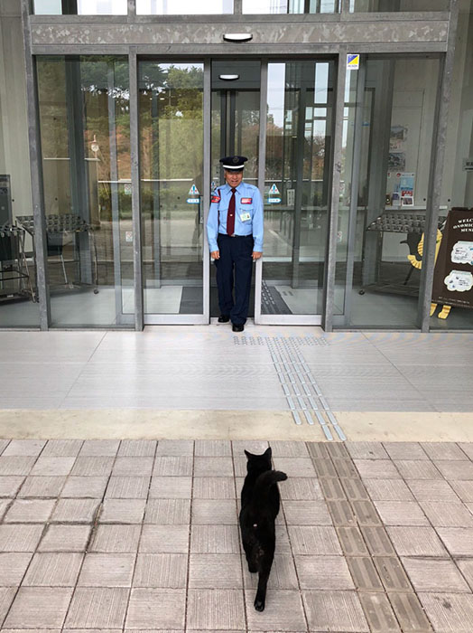 Вот уже три года коты не оставляют попытки попасть внутрь музея.