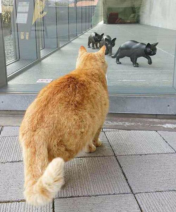 Скульптуры котов в музее есть, а самих котов не пускают.