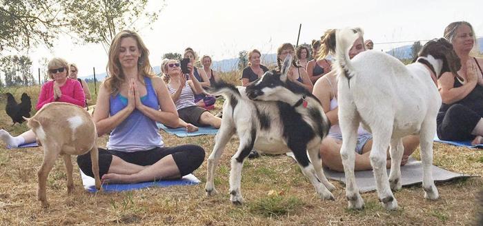 Хозяйка фермы организовала классы по йоге прямо у себя на ферме.