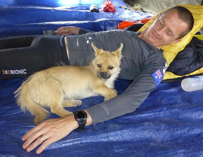 Пока Дион Леонард оформлял документы на перевозку собаки в Шотландию, собака пропала.