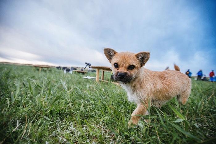 Диону предстоит еще много работы по оформлению переезда собаки, но разлучаться он не намерен.