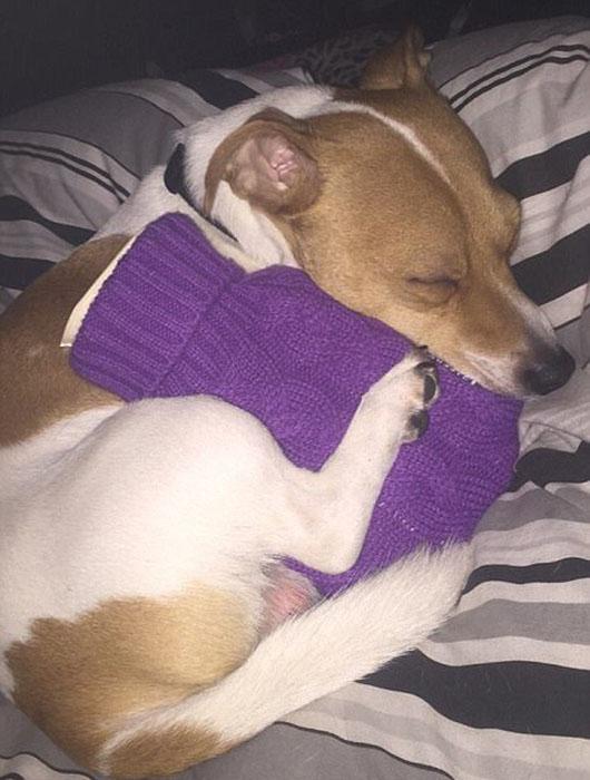 Щенок в приюте никак не мог согреться и постоянно дрожал после ночей на улице и работница заведения сделала ему мини-грелку. С ней собака моментально успокоилась и уснула.