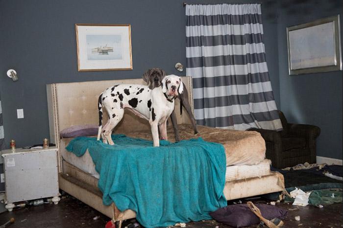 Весь интерьер особняка отдали собакам на растерзание.