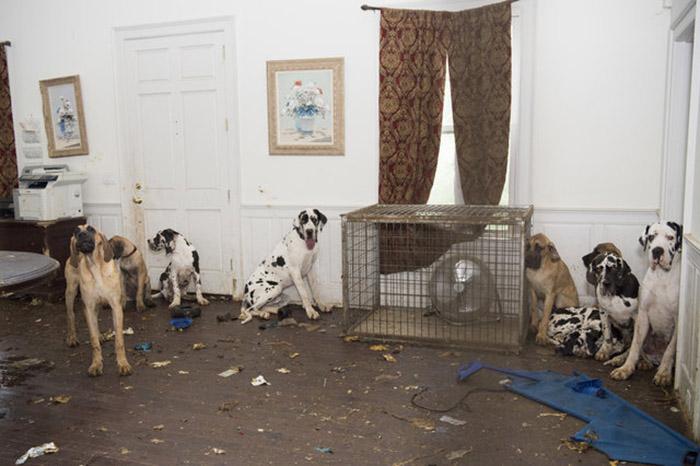 Собаки потрошили дом изнутри, так как им больше нечем было себя занять.