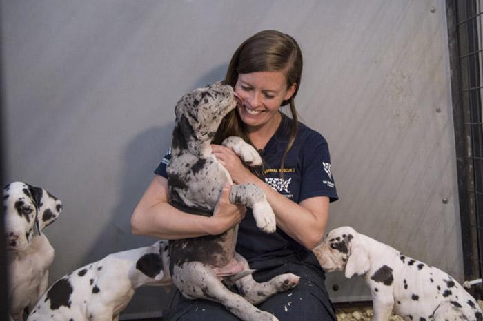 Всех спасенных собак со временем пристроят в разные приюты.