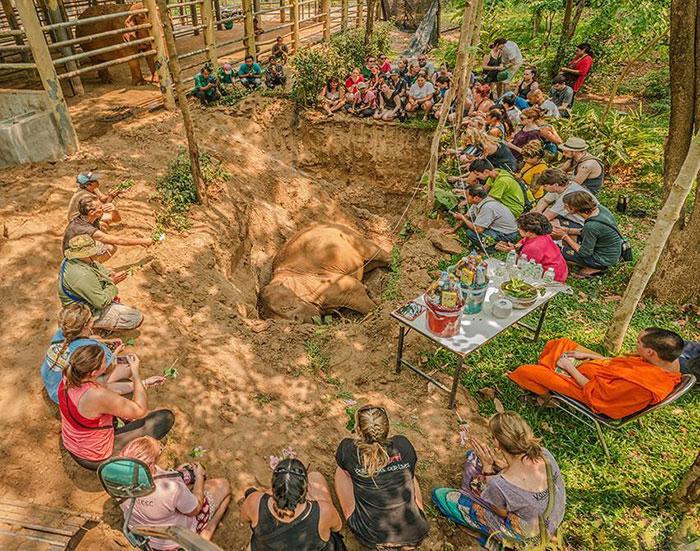 Смотрители заповедника хоронят умершую слониху.