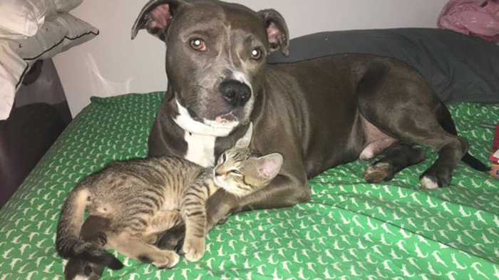 Пес Бишоп и кот Дуг отлично ладят друг с другом.