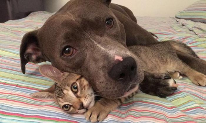 Коты, собака и крысы дружно живут под одной крышей.