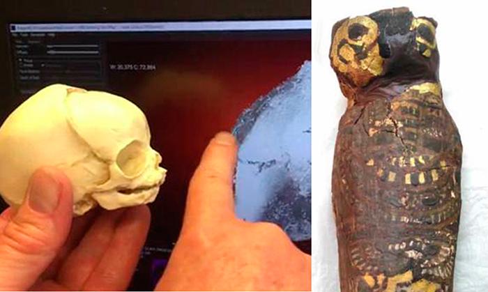 Что насамом деле скрывает всебе египетская «мумия сокола».