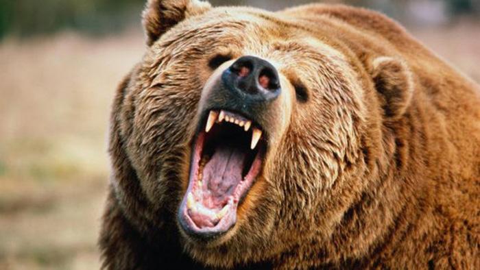 В селе Приморского края шестиклассник спас друга от нападения медведя.