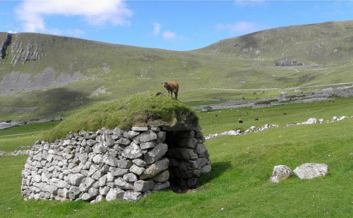 Остров Хирта с дикими овцами.