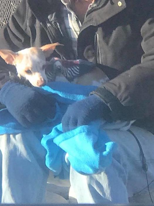 Маленькая собачка на руках своего спасителя.