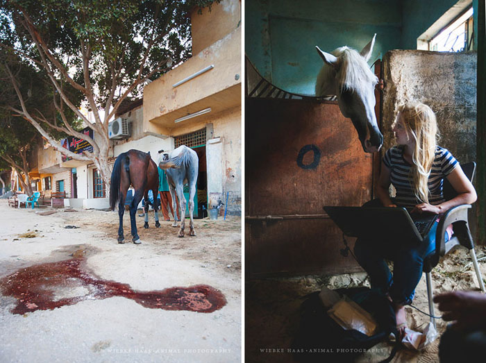 У владельцев лошадей не всегда есть деньги на услуги ветеринара.  Фото: Wiebke Haas.