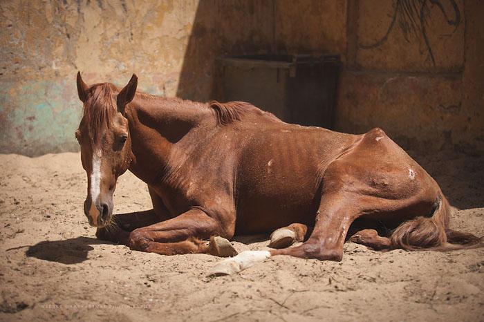 Организация помогает вылечить больных крупных домашних животных. Фото: Wiebke Haas.