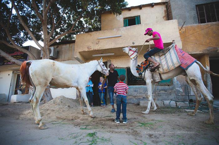 Энтузиасты также проводят просветительную работу среди владельцев лошадей и верблюдов. Фото: Wiebke Haas.