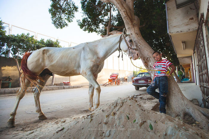 Некоторым лошадям приходится работать по 20 часов в день. Фото: Wiebke Haas.