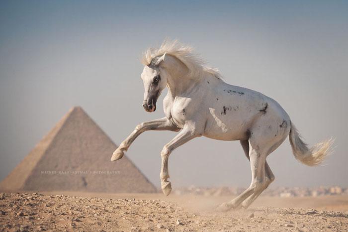 Лошади пирамид. Фото: Wiebke Haas.