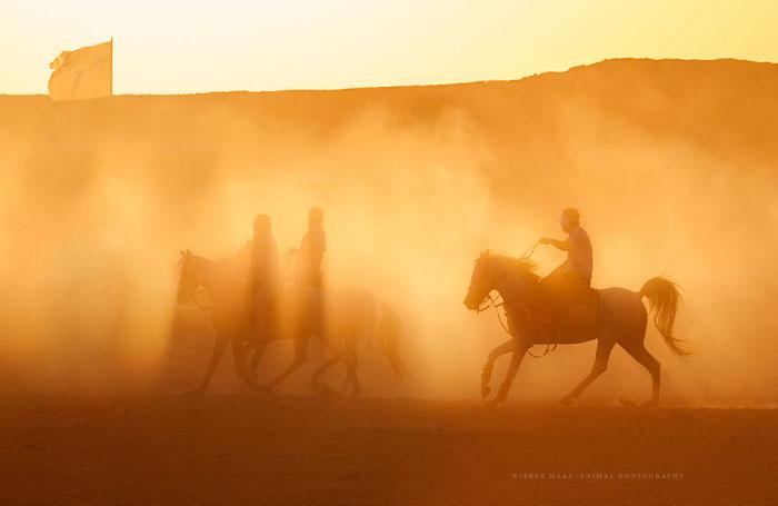 Карим - имя одной из первых лошадей, спасенных организацией. Позже это имя стало именем всего проекта. Фото: Wiebke Haas.