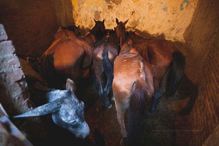 Животные в Каире страдают не из-за того, что люди злые, а из-за общей бедности и отсутствия просвещения.  Фото: Wiebke Haas.