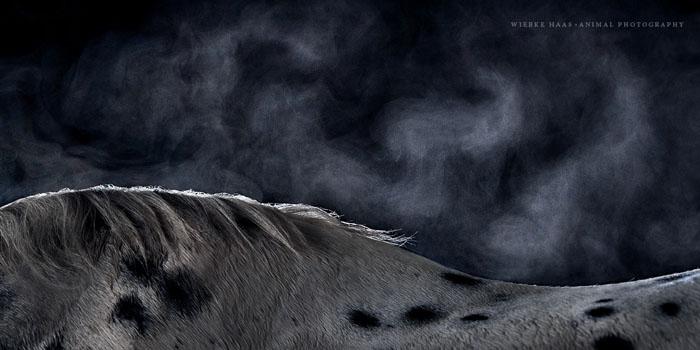 Туманная гора.  Фото: Wiebke Haas.