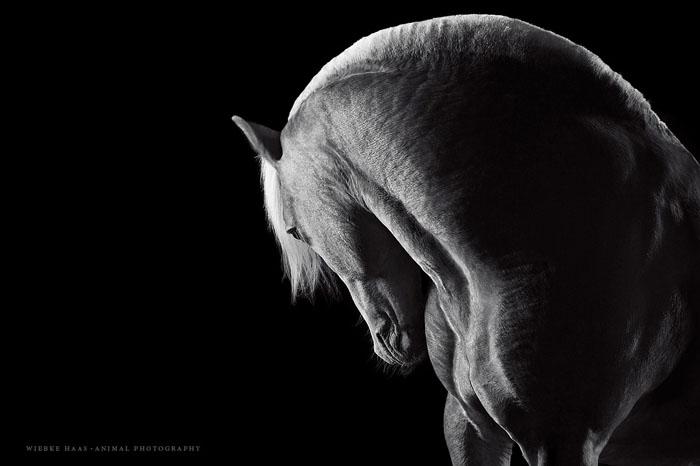 Сила.  Фото: Wiebke Haas.