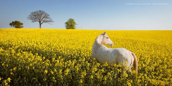 Желтый океан.  Фото: Wiebke Haas.