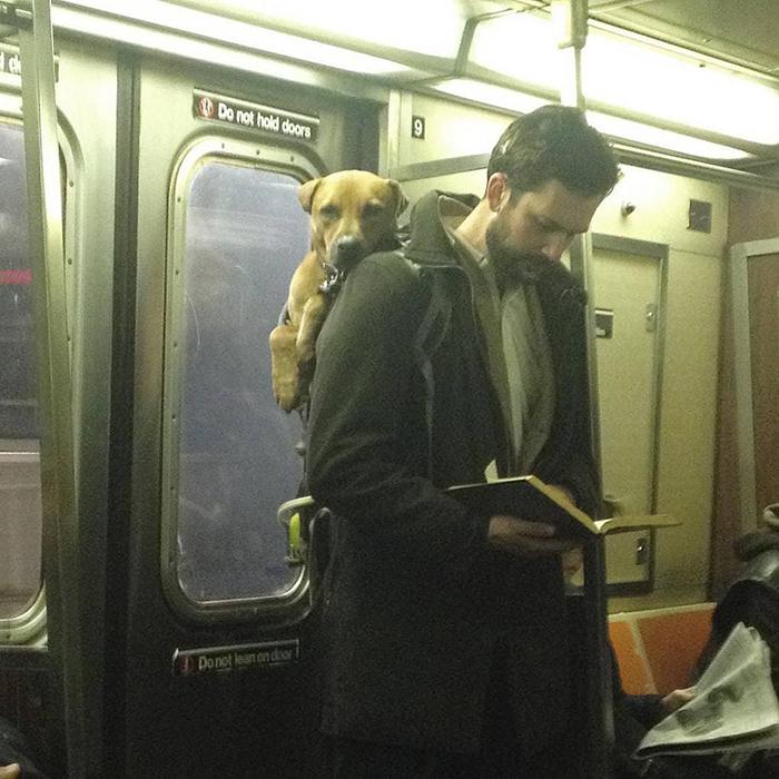 Ну кому может не понравиться мужчина, который читает и носит своего друга по городу? Разве что, может так статься и у меня будет конкурент за место в его постели. Ну да ладно, зато я не храплю, в отличие от этого пса!   Instagram hotdudesreading.