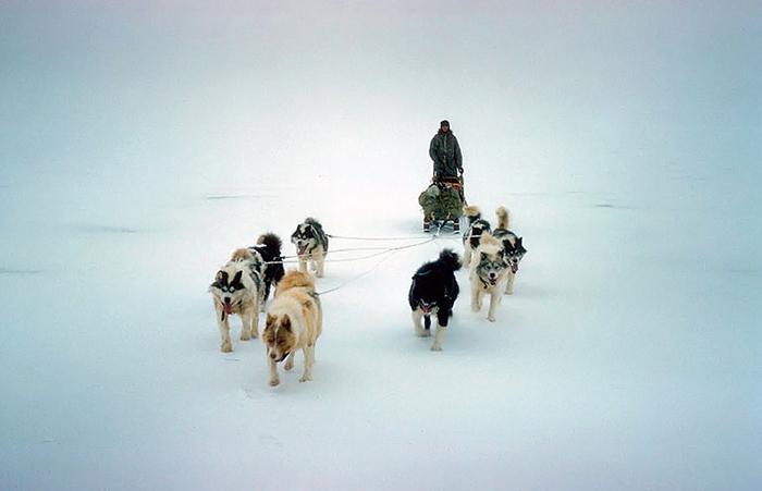 Собаки в Антарктиде.