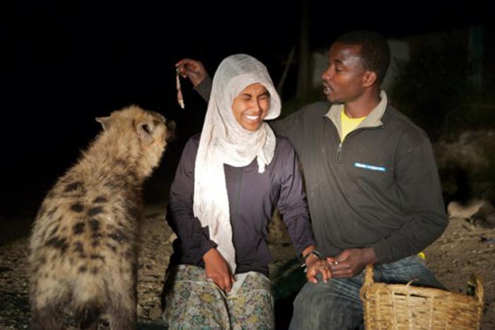 Мулугета с туристкой кормят гиен.