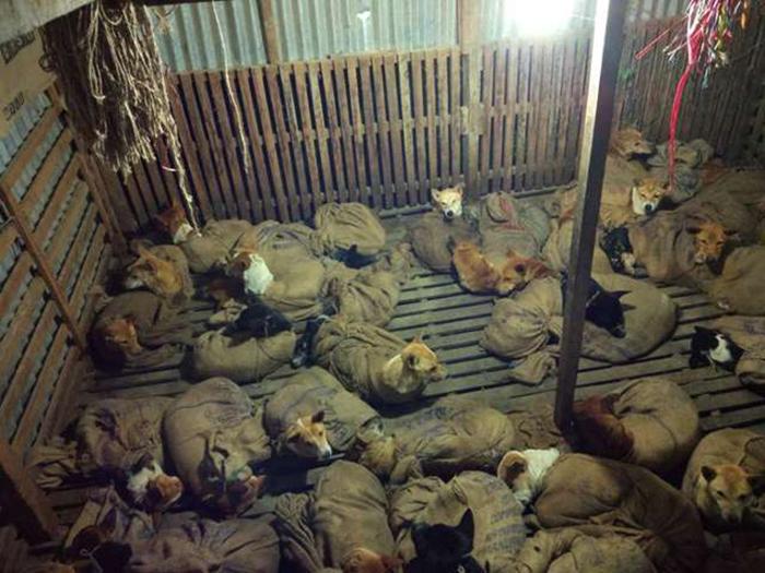 Собак перевозили связанными.