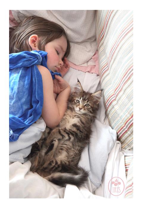 Кошка Тула - новый член семьи.
