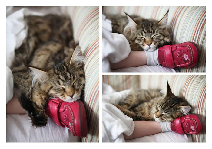 Душевная дружба Айрис Грейс и кошки Тулы.