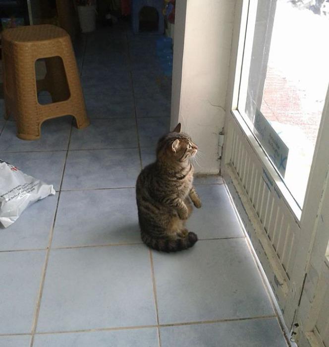 Кот в магазине Байала во время метели.