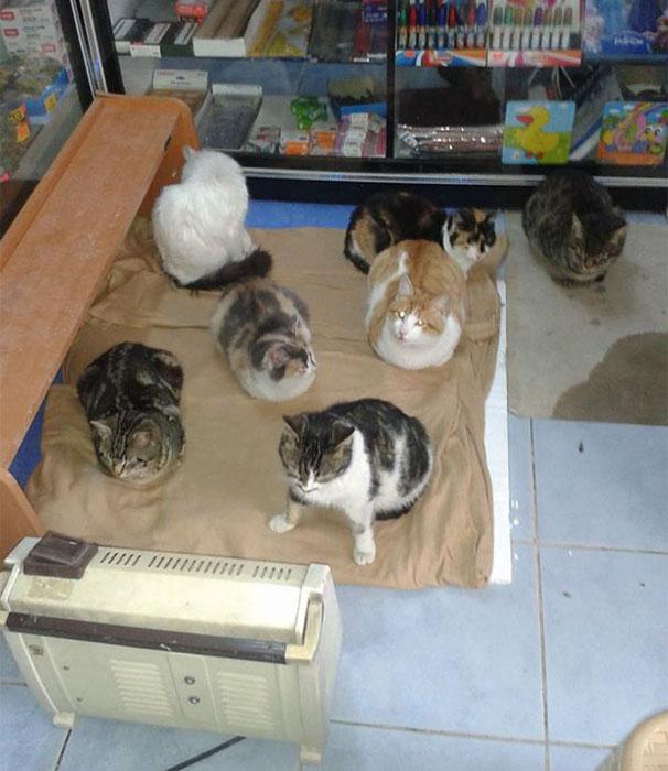 Кошки греются возле обогревателя.