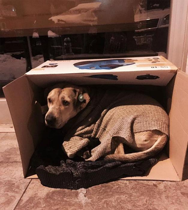Бездомная собака в пледе и в коробке во время метели в Стамбуле.